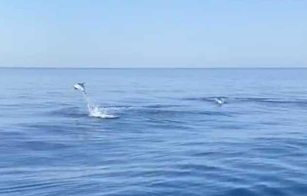 Avvistati delfini nel Mar Ionio